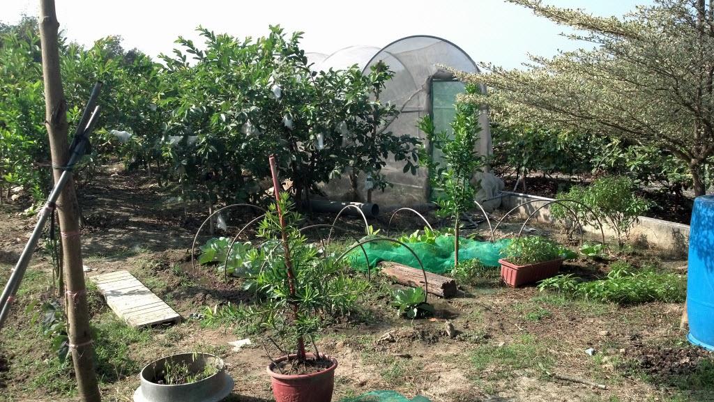 Organic Garden有機菜園