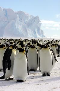皇帝ペンギンに出会える旅