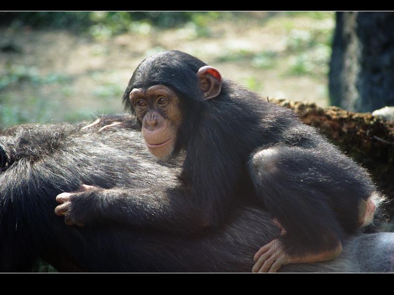 Taipei Zoo 抓猴吧