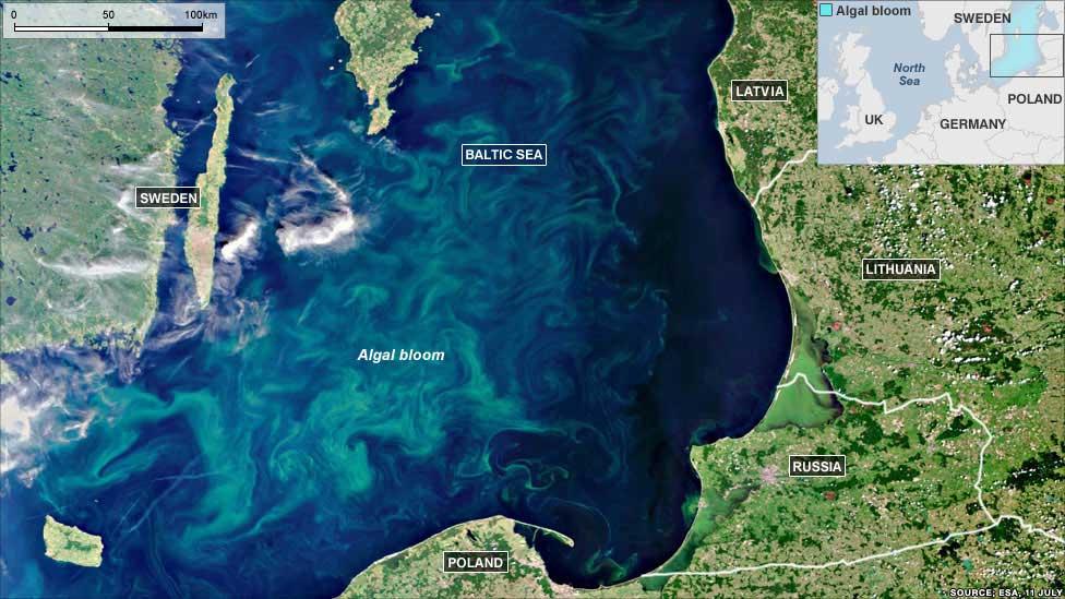 floración de fitoplancton Mar Báltico