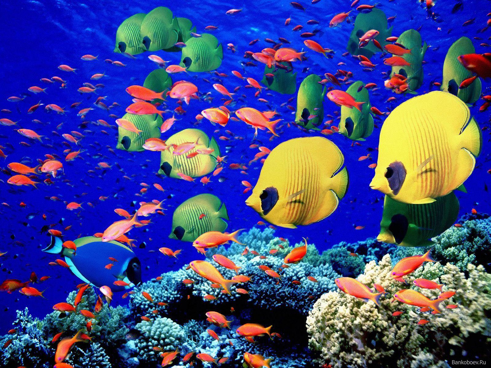 peces y arrecifes de coral