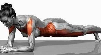 The Target Muscles of Planks