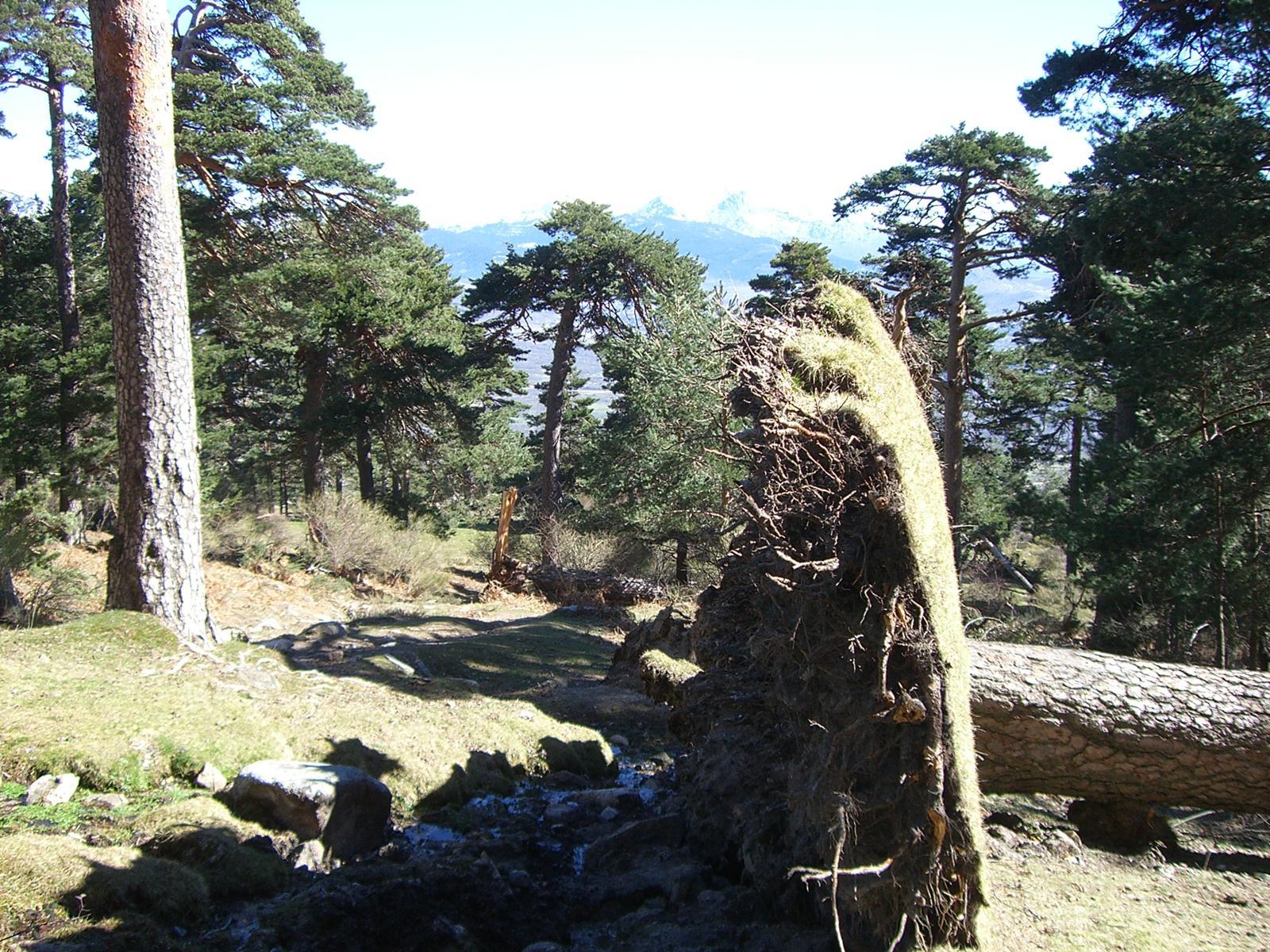 Base del Pino con Navacerrada de fondo.