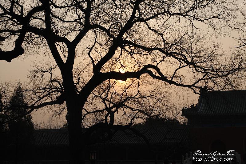 2011-02-19的天坛古树